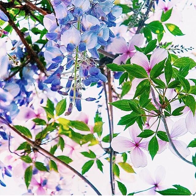 FloralFridayJune 48.jpg