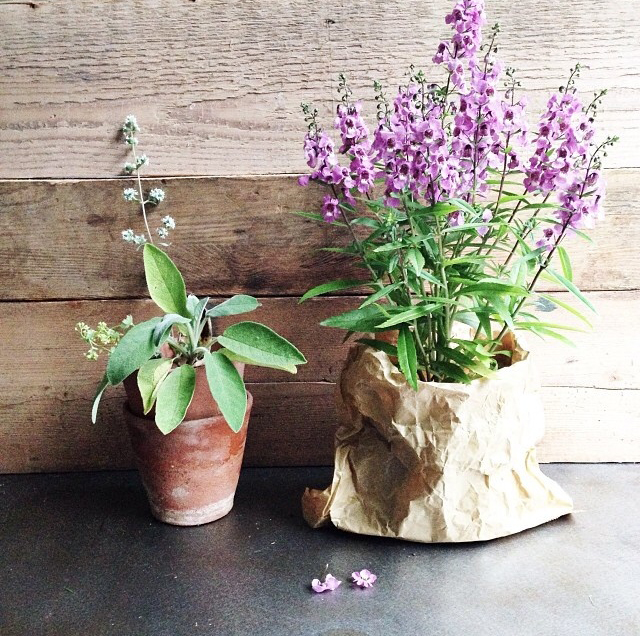 FloralFridayJune 55.jpg
