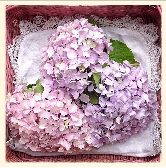 FloralAugust 7.jpg