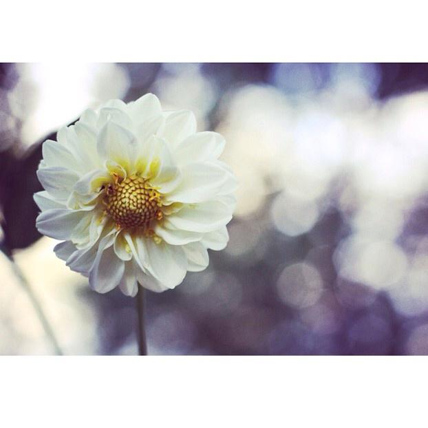 FloralAugust 13.jpg