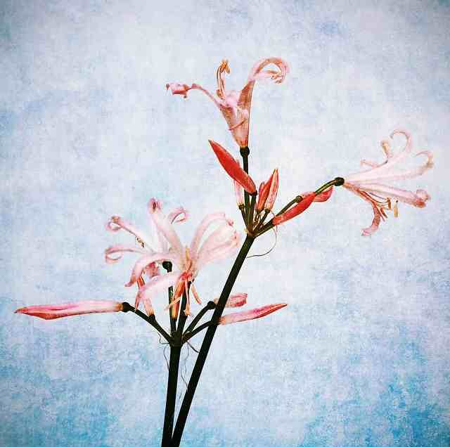 floraloctober 2.jpg