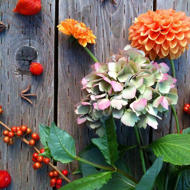 FloralOctober 27.jpg