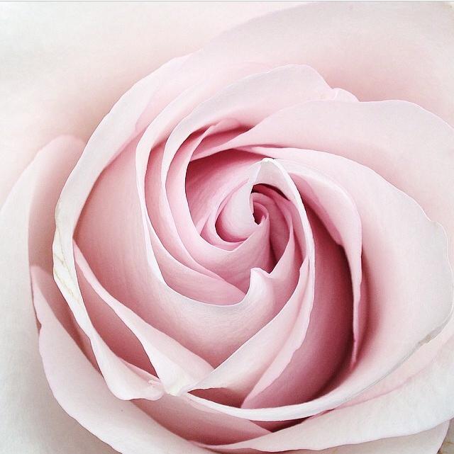 FloralOctober 44.jpg