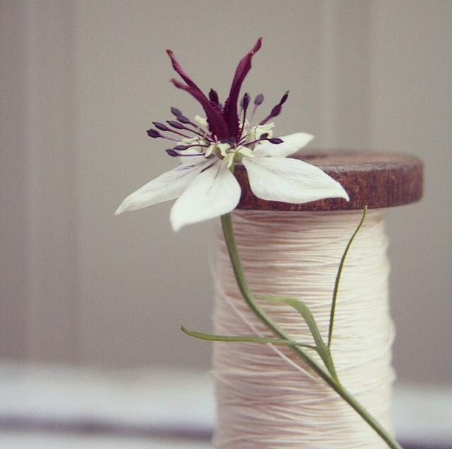 FloralOctober 67.jpg