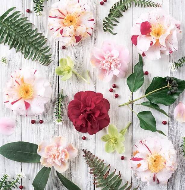 Floral Friday Winner | Makelight