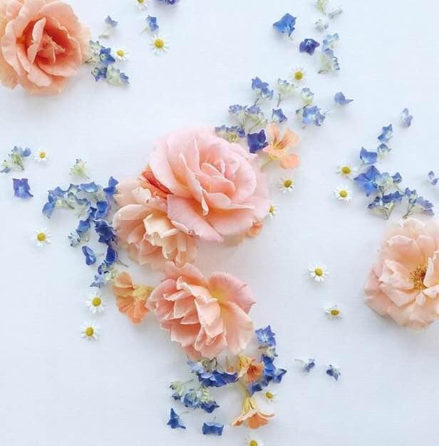 Floral Friday Winner | Leslie Shewring