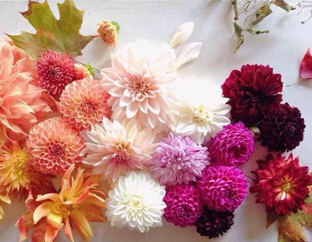 Makelight | Floral Friday Winner