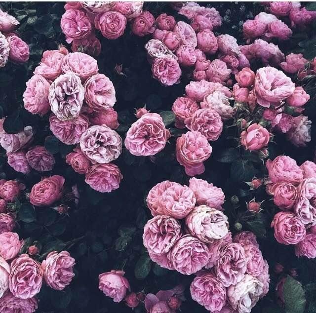 Floral Friday Winner : Makelight