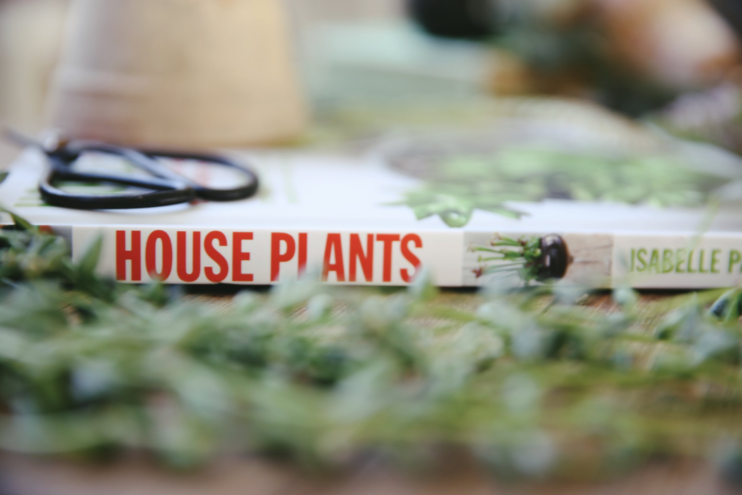 House Plants by Isabelle Palmer : Makelight