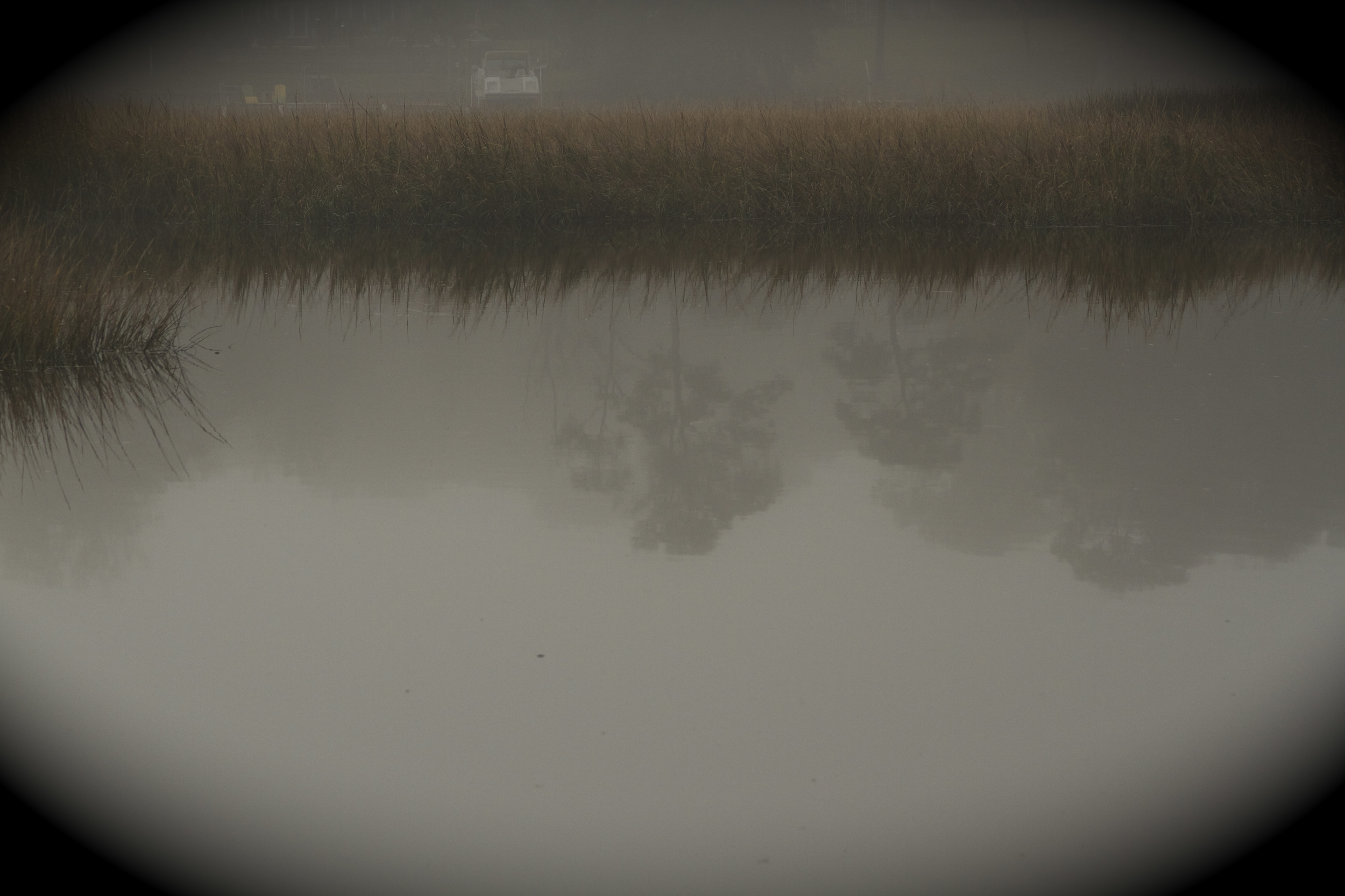 Trees begin to appear in the fog.