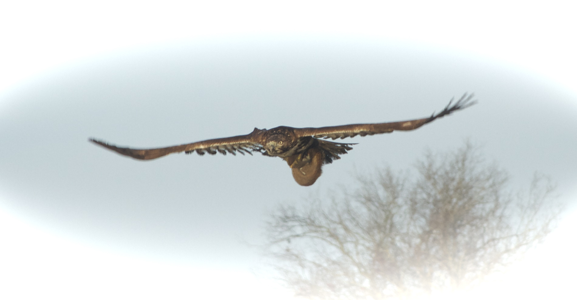 The Hawk and prey swoop quickly by.