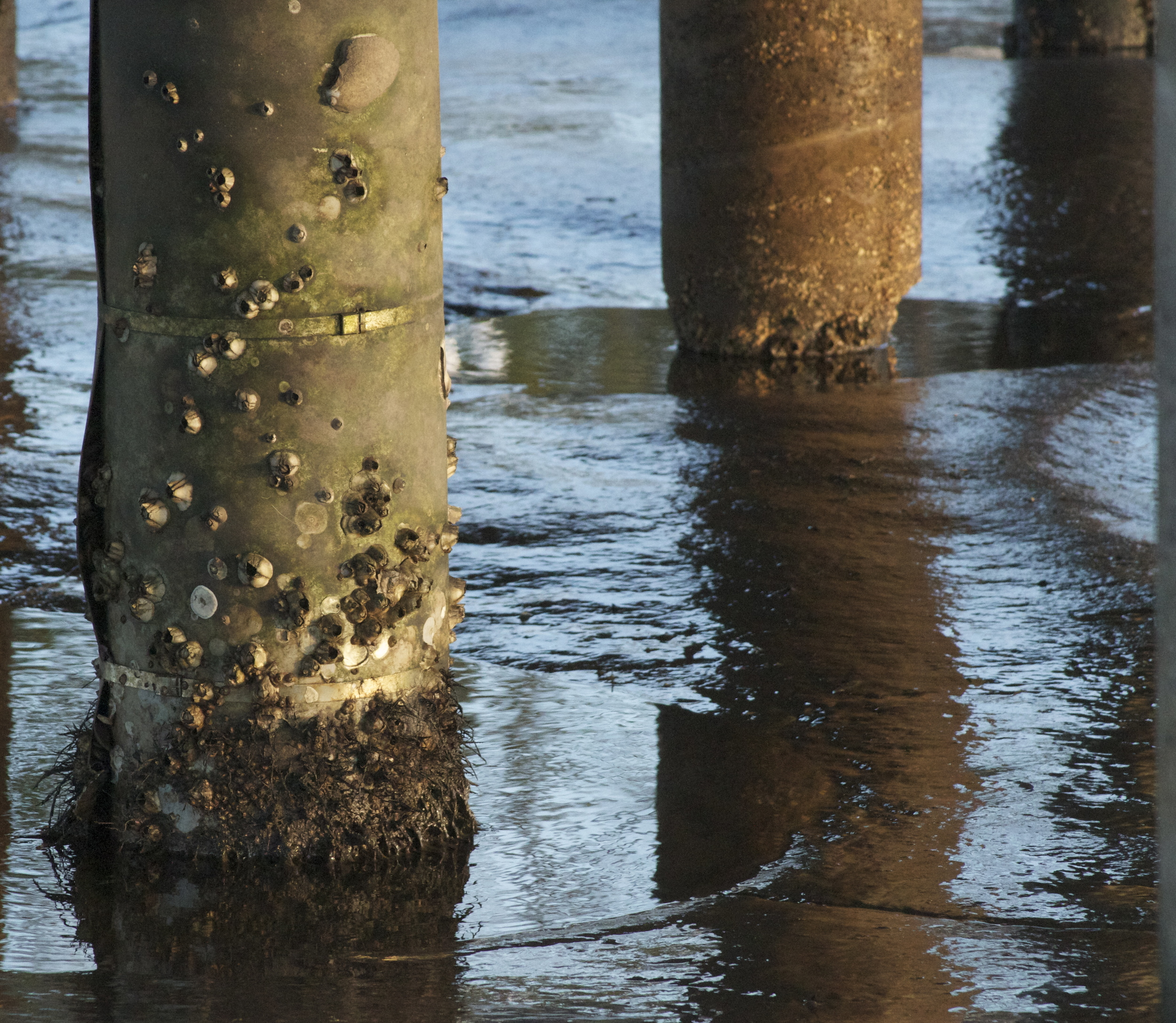 The barnacles of life