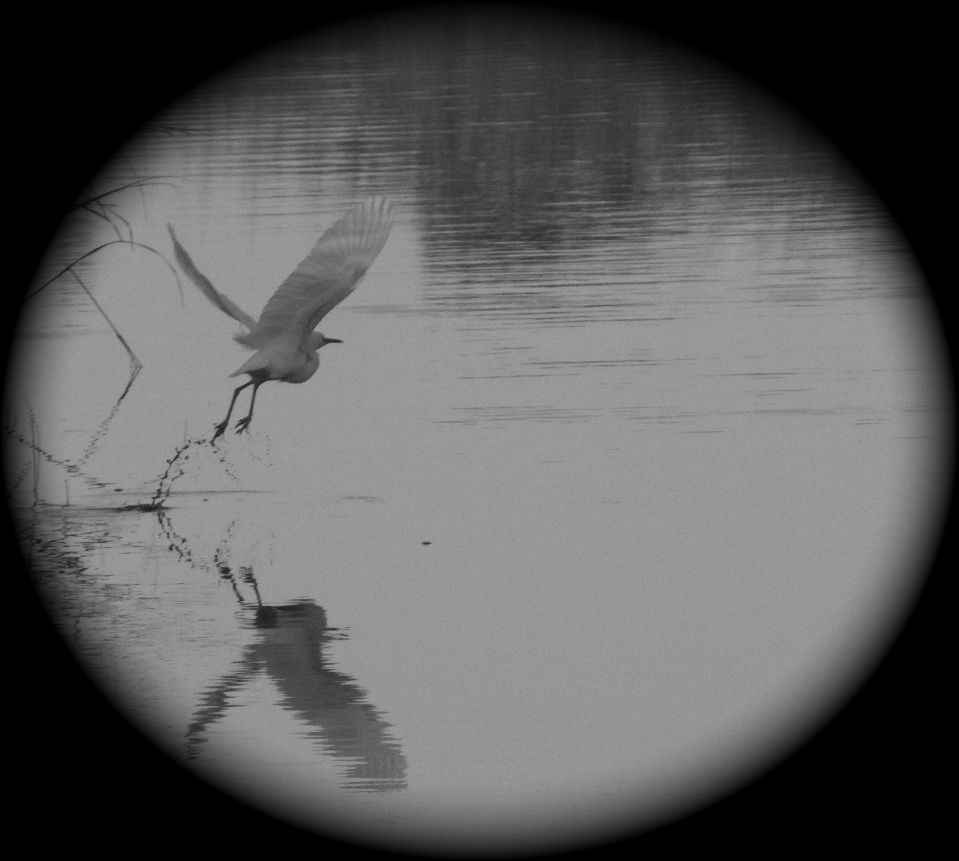 A Bird lifts up out of the marsh unseen.