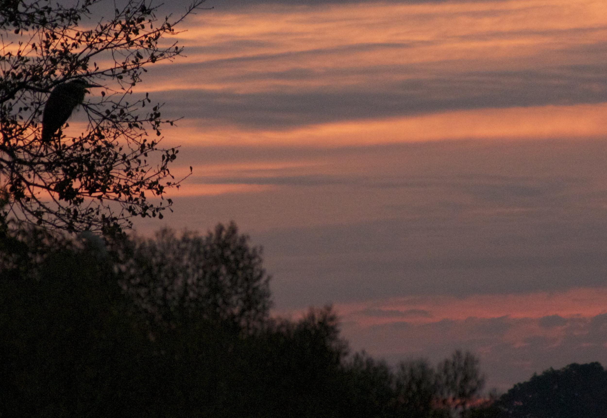 Old Man River observes Red Sky in Morning. Herons take warning.