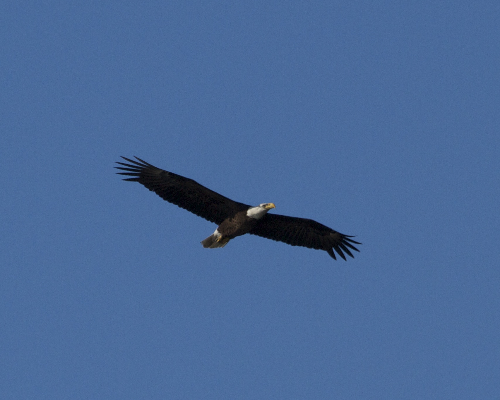 The Great Bald Eagle declares IT IS SPRING ON THE BROWARD!