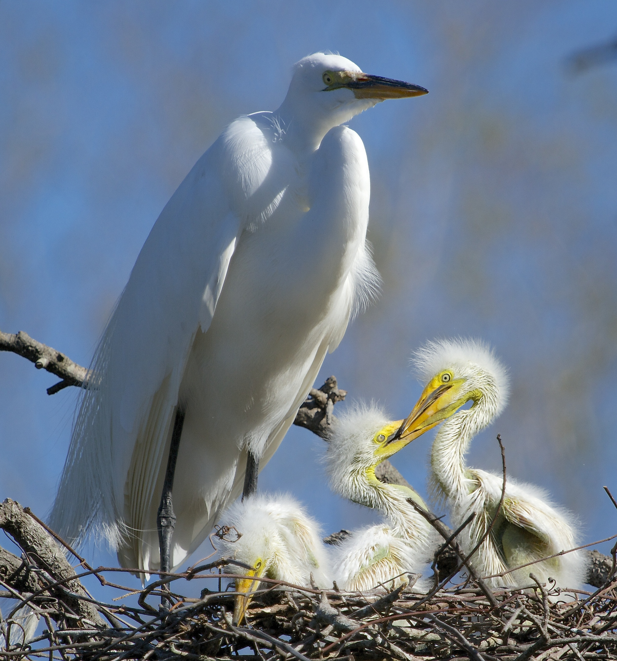 The nest is built just in time for three new arrivals!