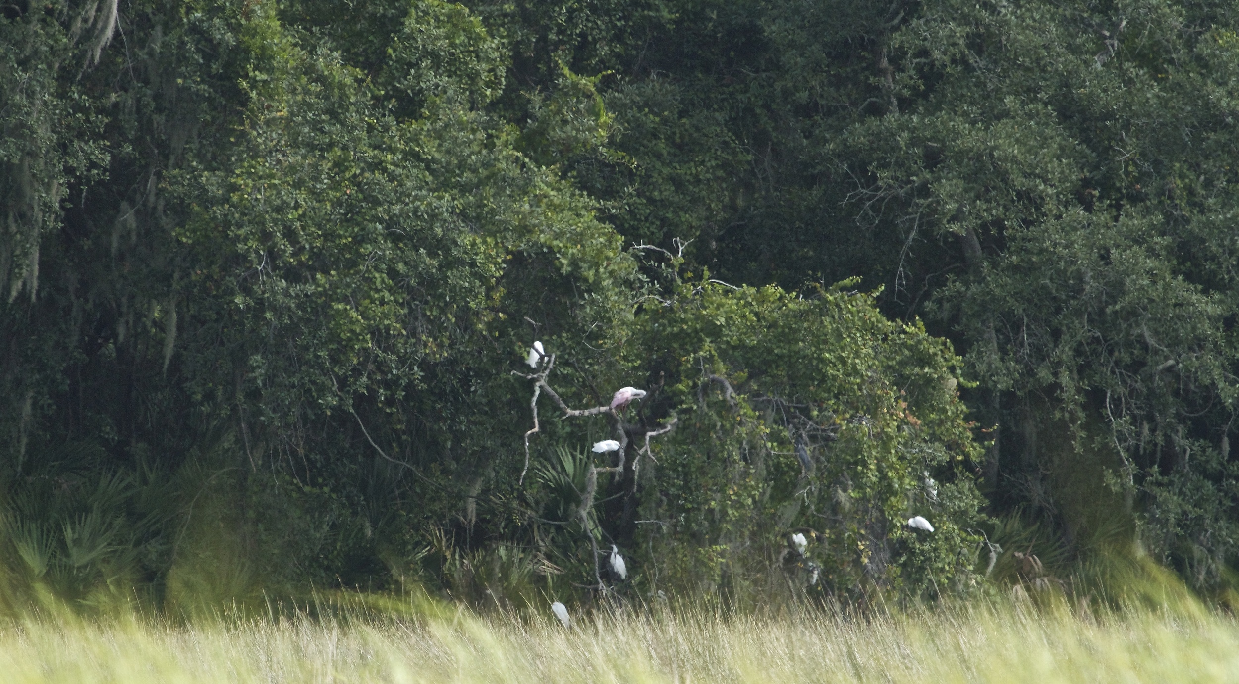 I find the secret Broward Bird Hangout!