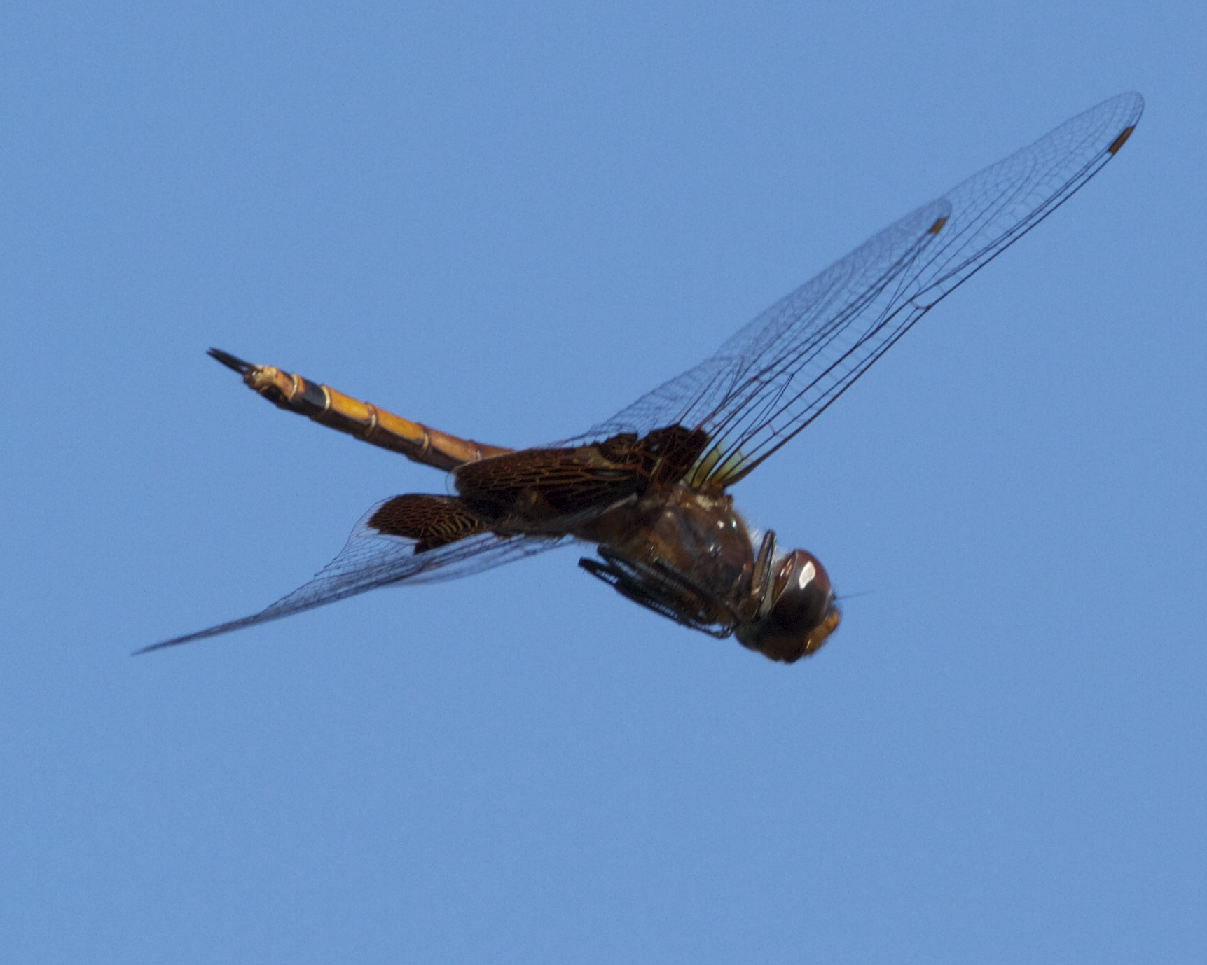 Me too says the dragon fly..