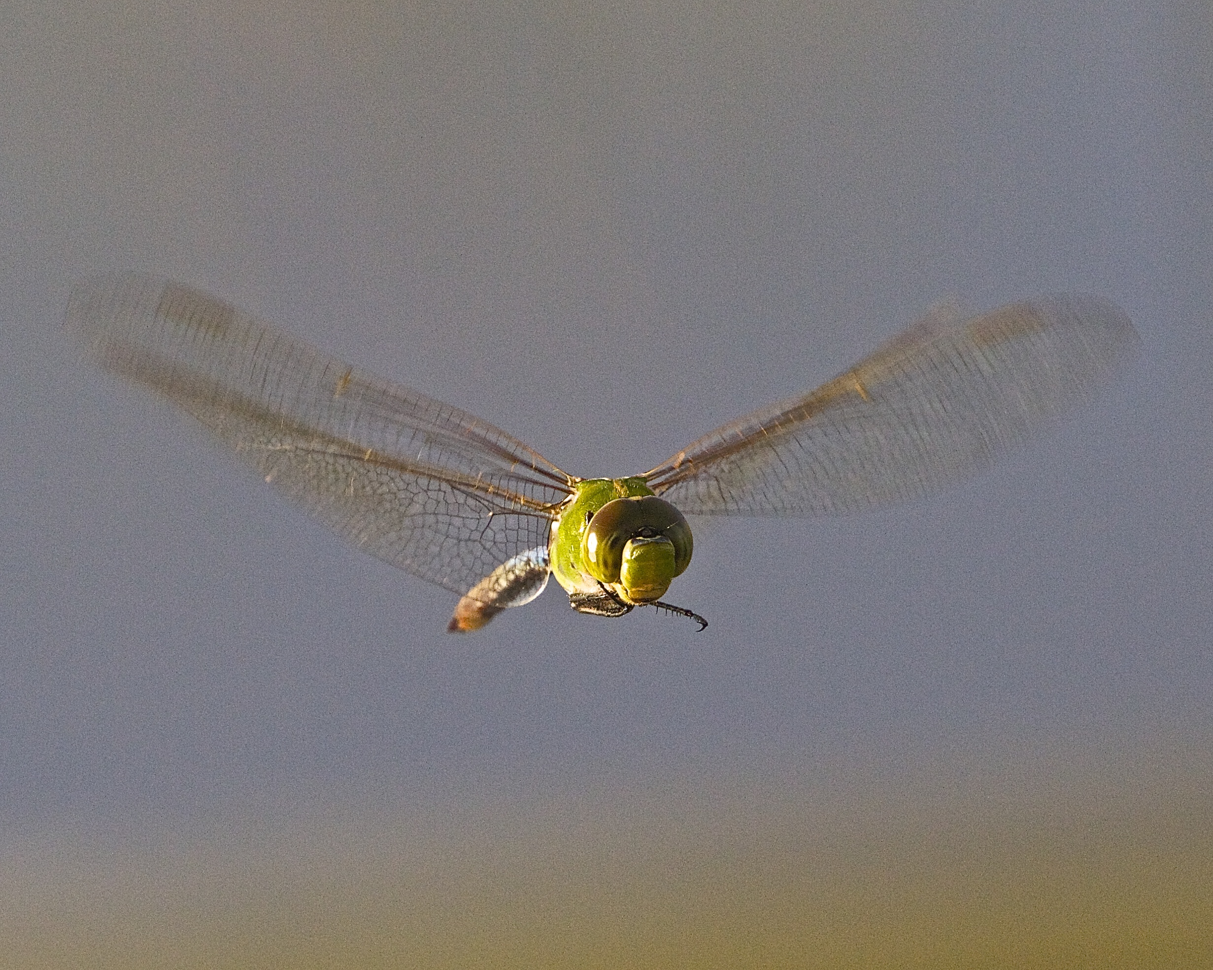 Bug eyed view of a Dragon Fly hovering over the dock.