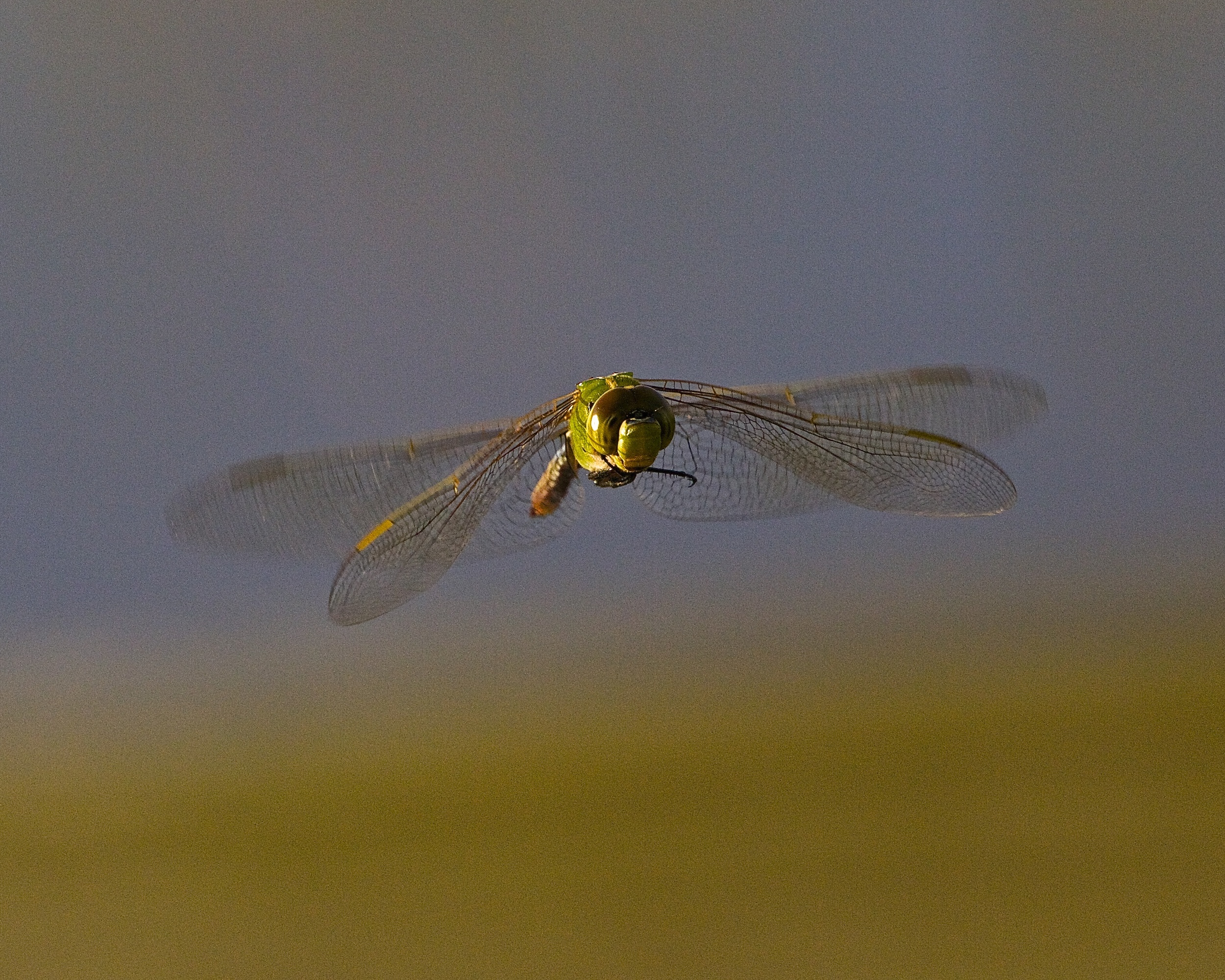 Four wings allow the Dragon Fly to hover, move sideways, backward and forward at speeds up to 30 miles per hour.