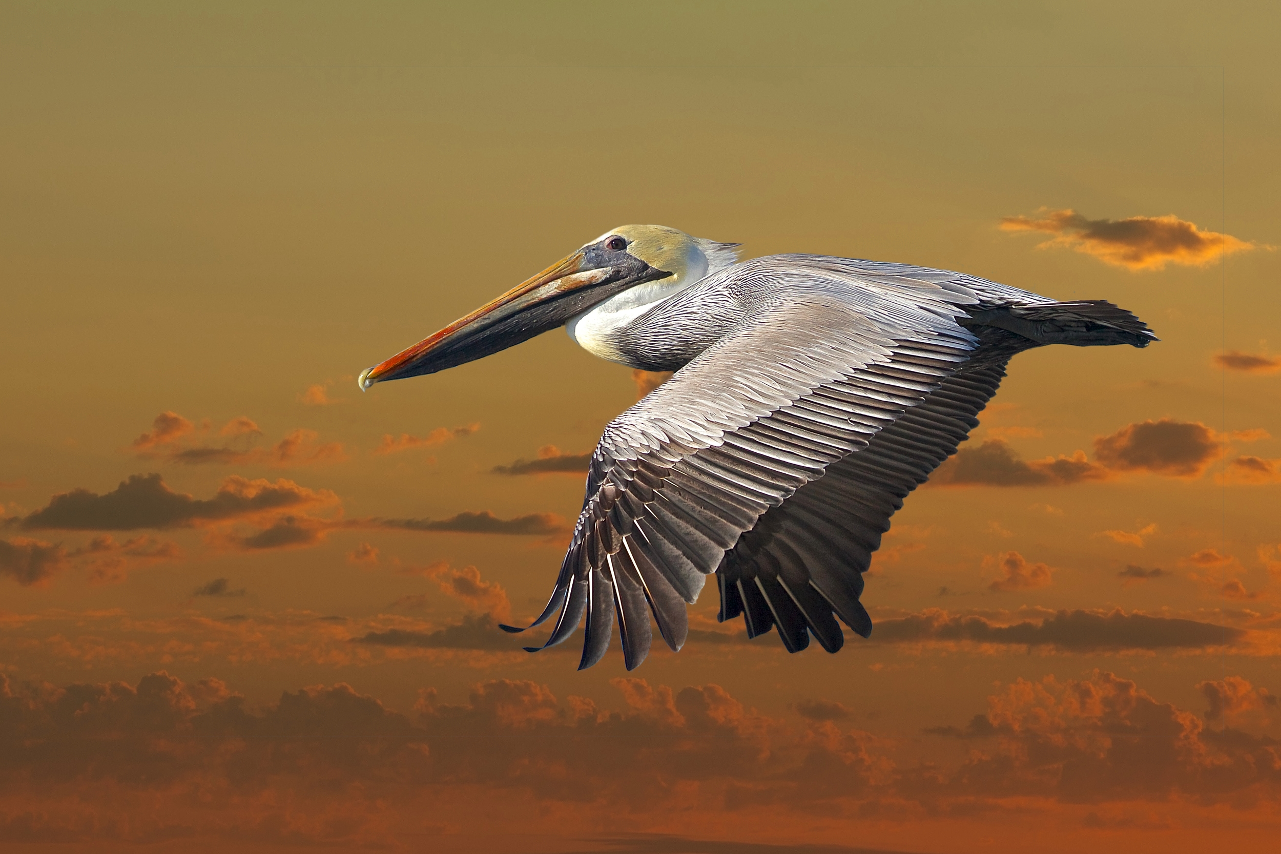"Flaps down at sunset with new background.. IE ""Photartistry"""