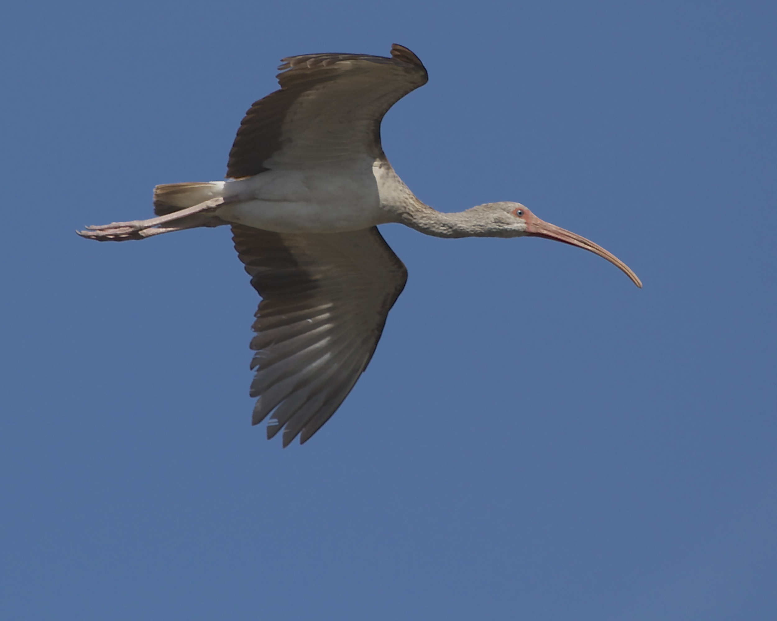 How does any Ibis say so long……Ibye!