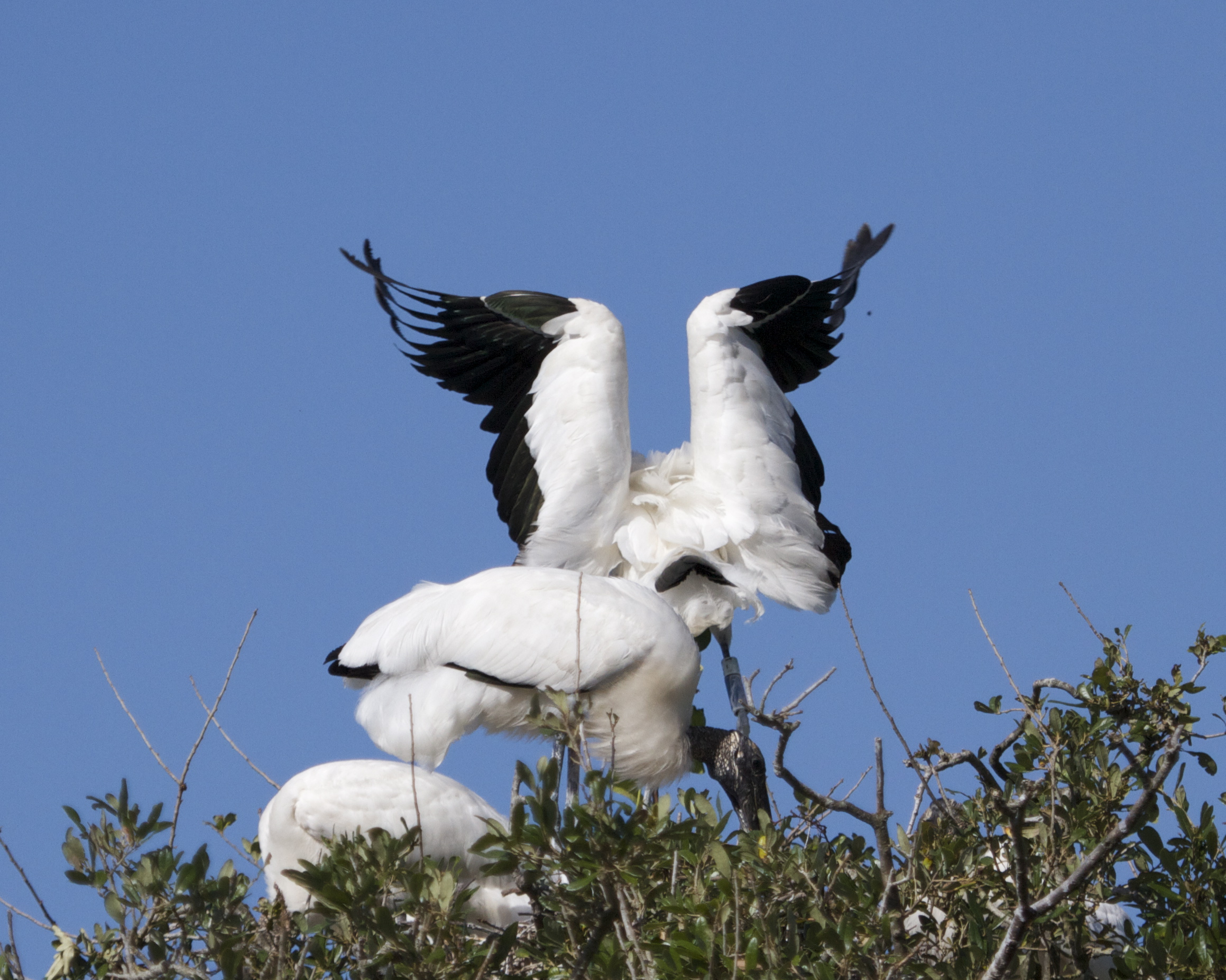 And touchdown…! Another fine flight by Wood Stork airlines..We deliver on time.