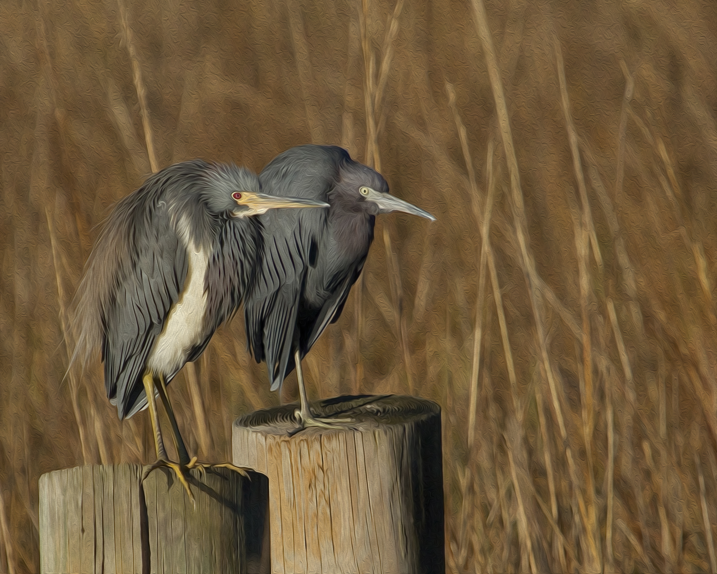 In this photo I took a pair of herons and again used the canvas artistic effect.
