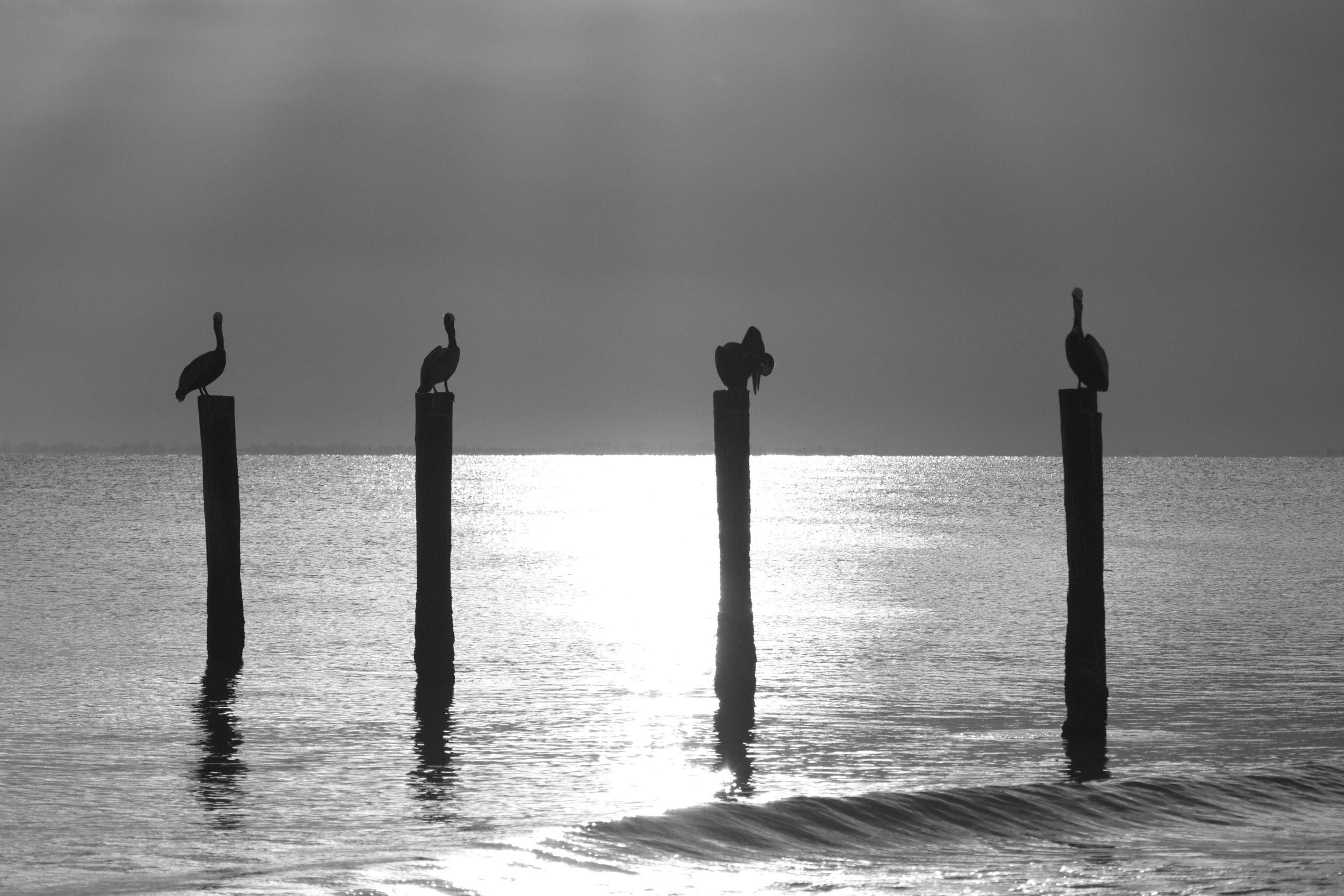 High Key sunset in Black and White, Little Estero Lagoon..