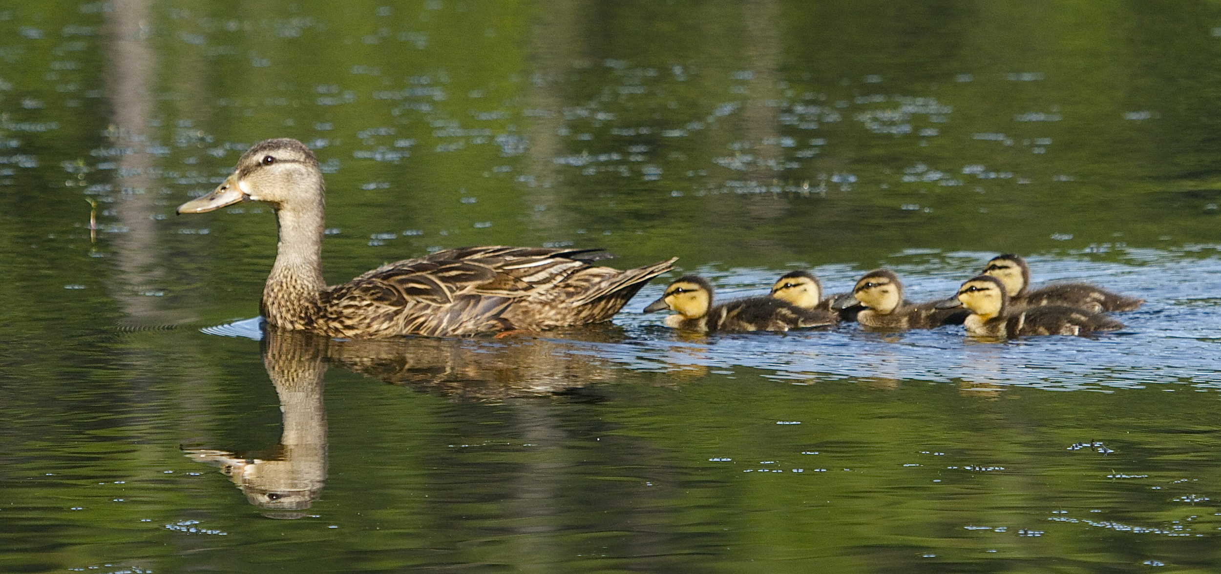 Got your ducks in a row for the summer heat wave?