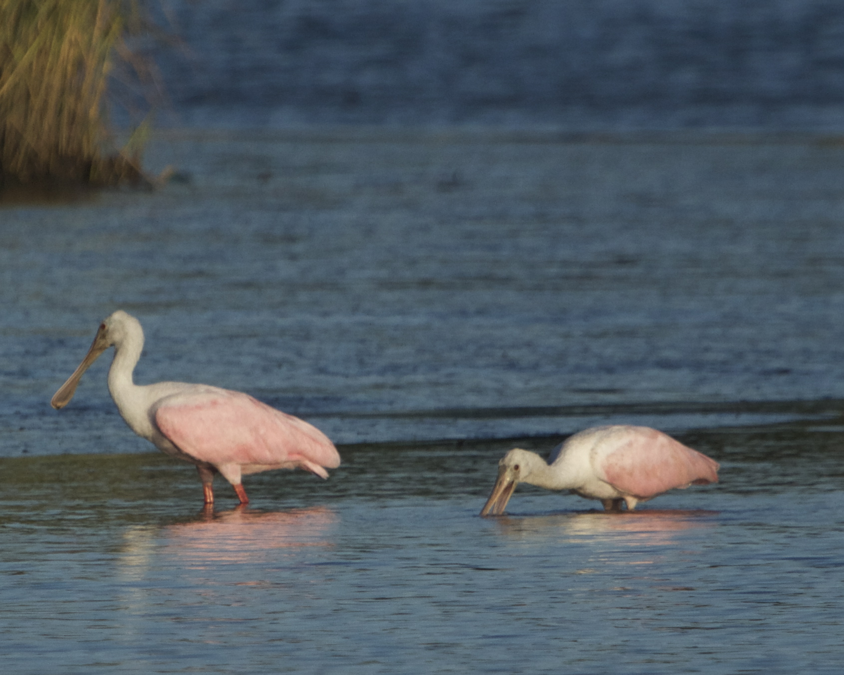 """Welcome back to the Broward, the Pink Coat """"Spoonies"""" are here!"""