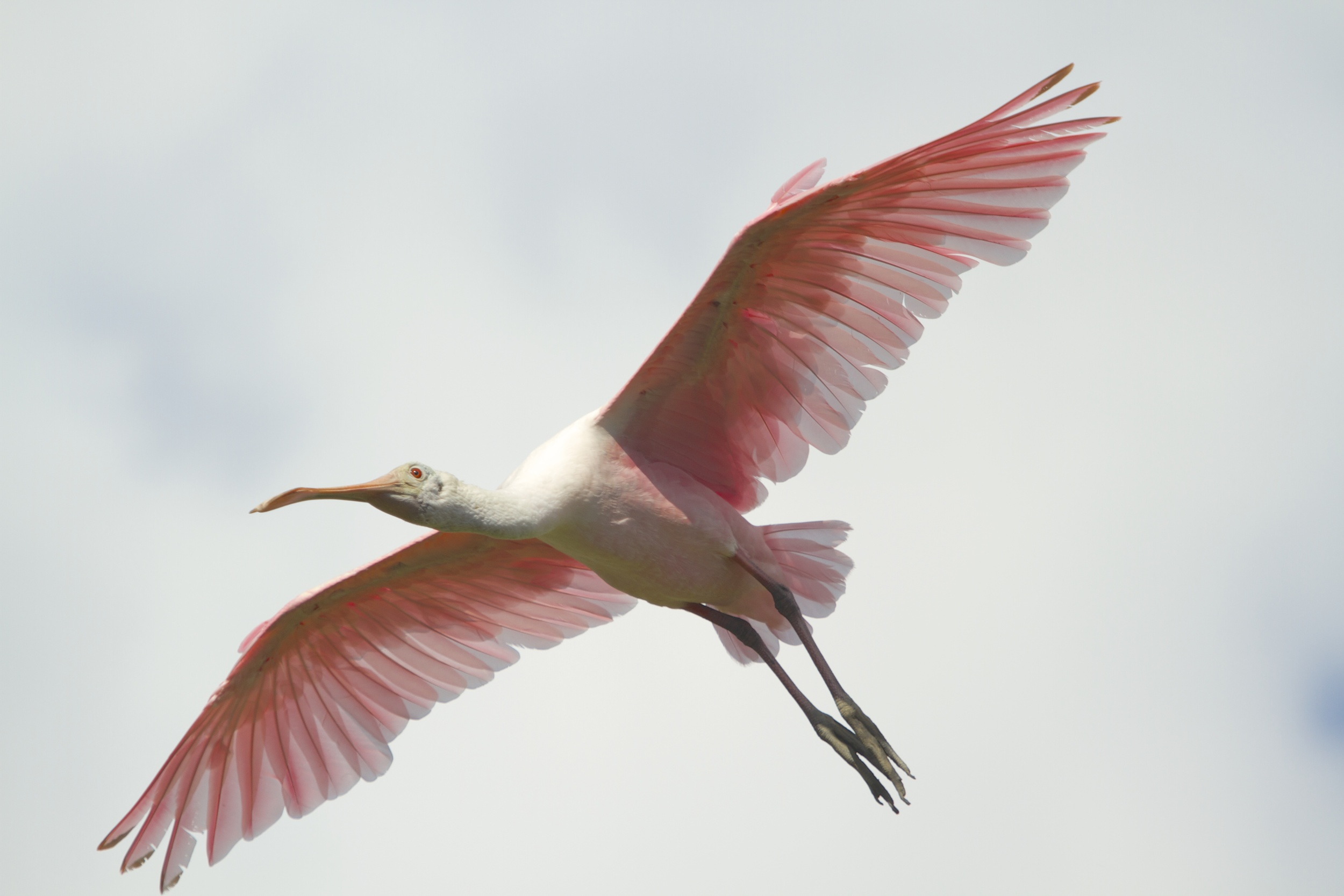 Translucent pink wings fill the sky.