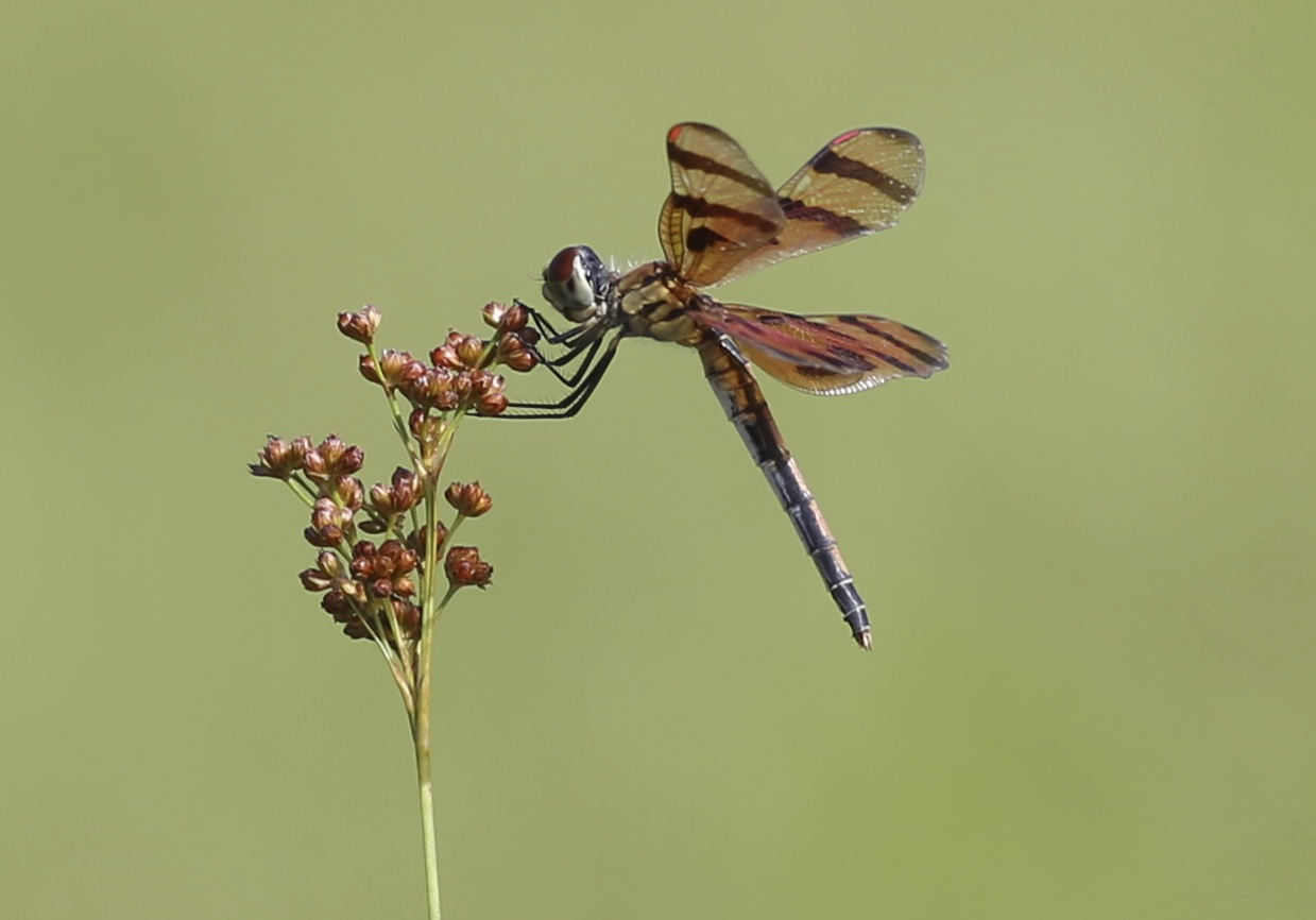 I just love these little flowers said the dragonfly! (test of a 400mm prime lens).