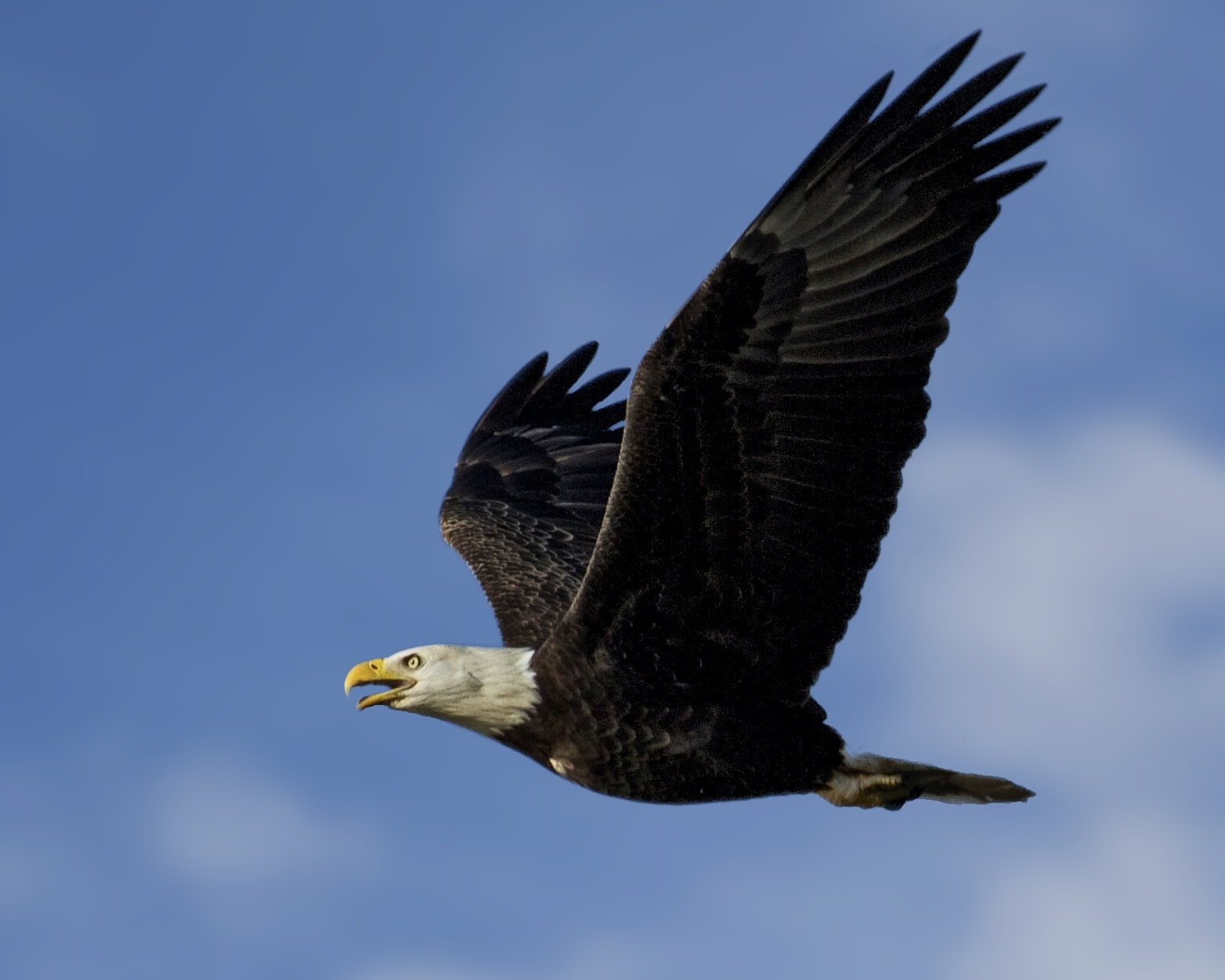 No bird is more majestic to me than an Eagle in flight.