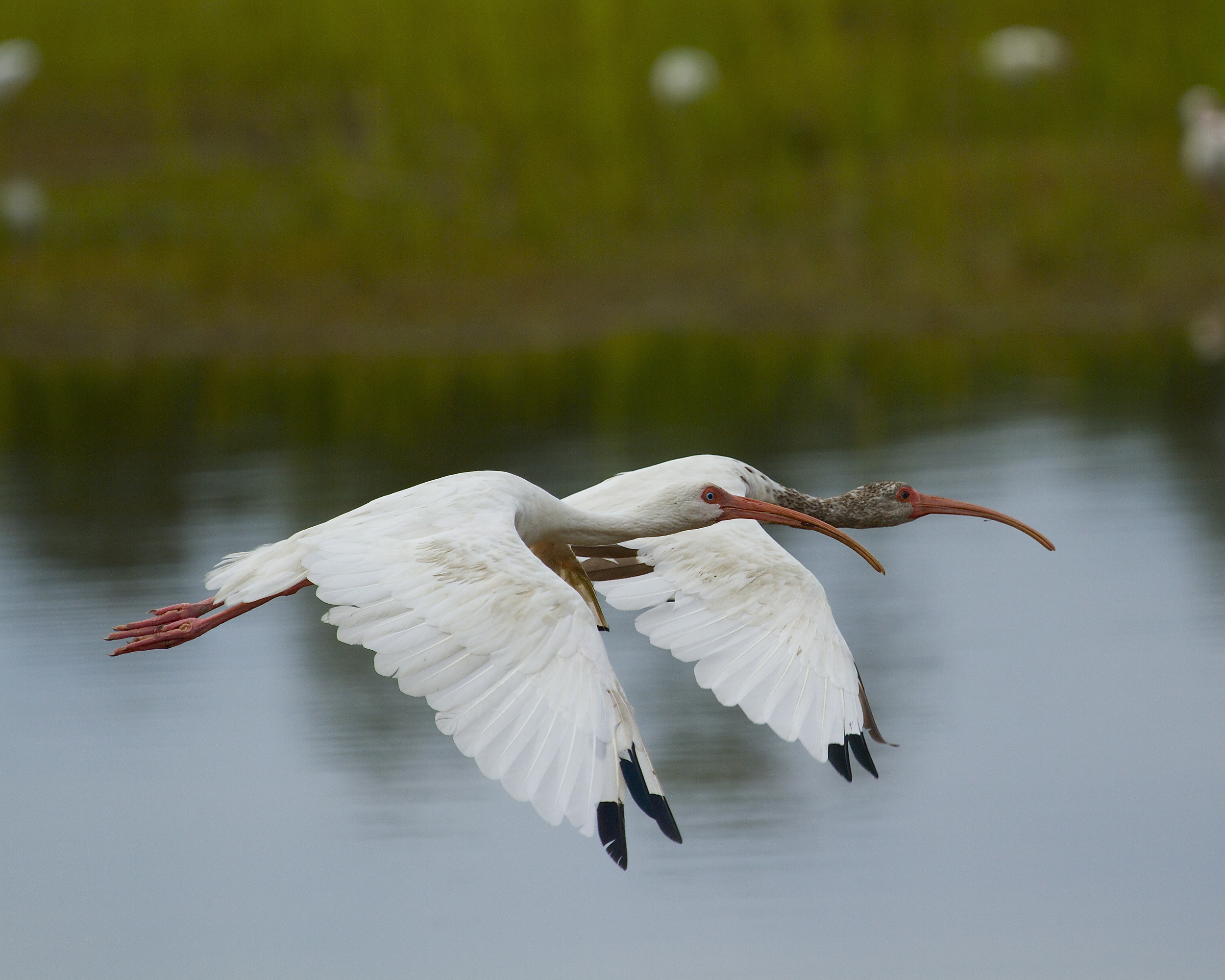 You have heard of synchronized swimming…this is synchronized winging.