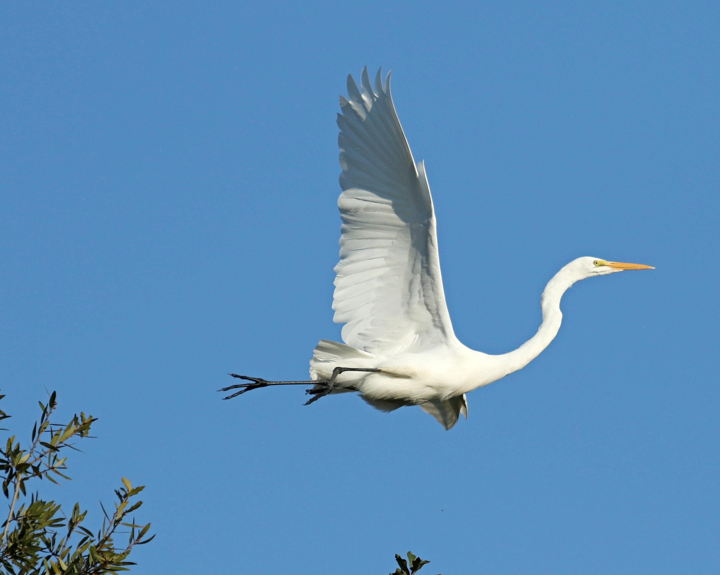 Then the Egret  puts the pedal to the metal. .