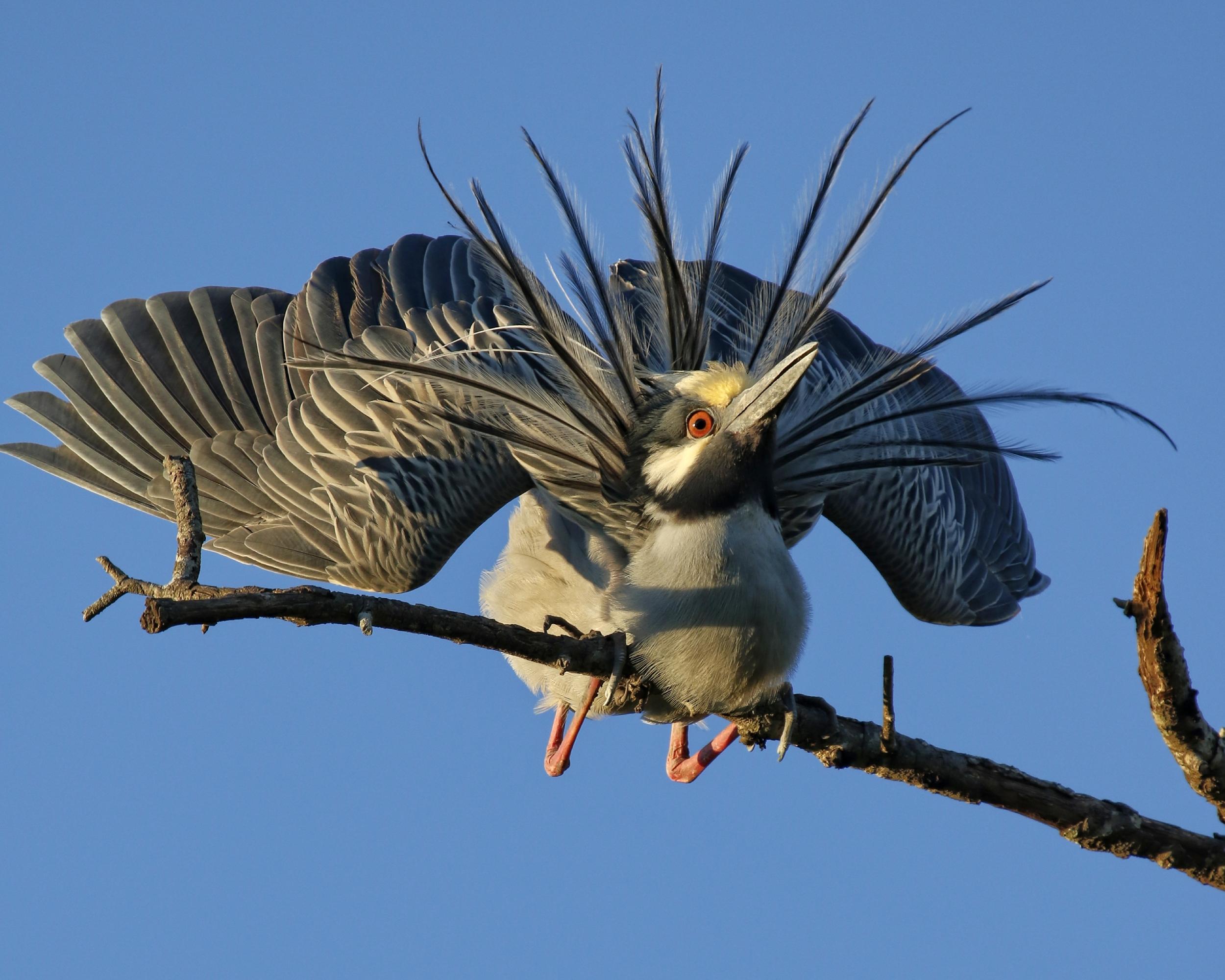 AHHGG! The boogey bird!