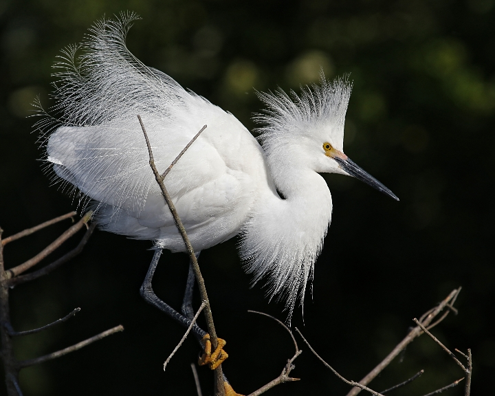 They live where there is Snowy Egrets..too cold for my thin feathered blood..