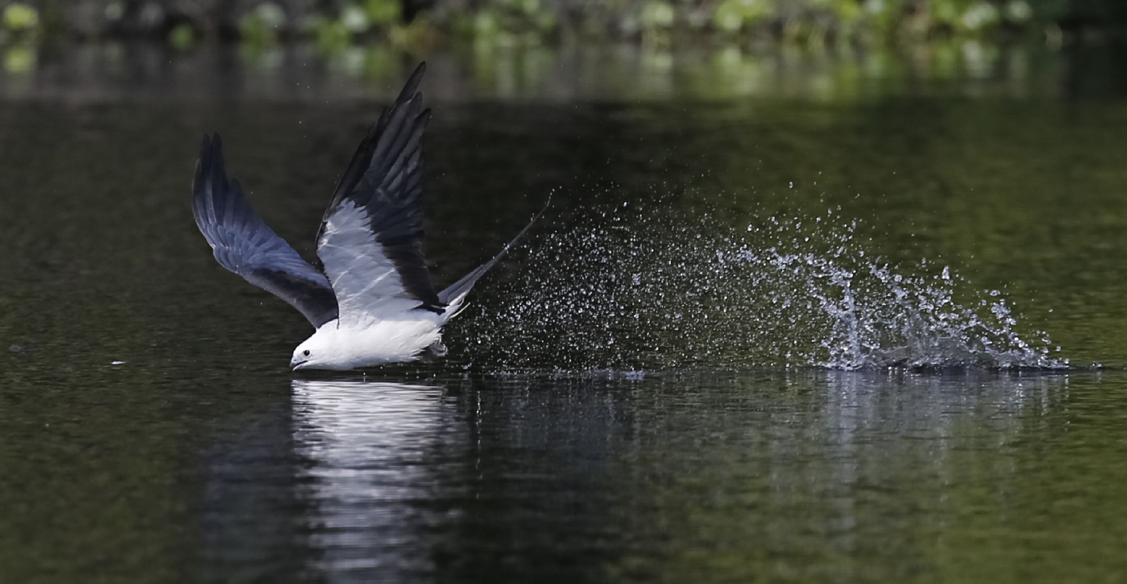 Early skimming activity shot in lower light conditions..