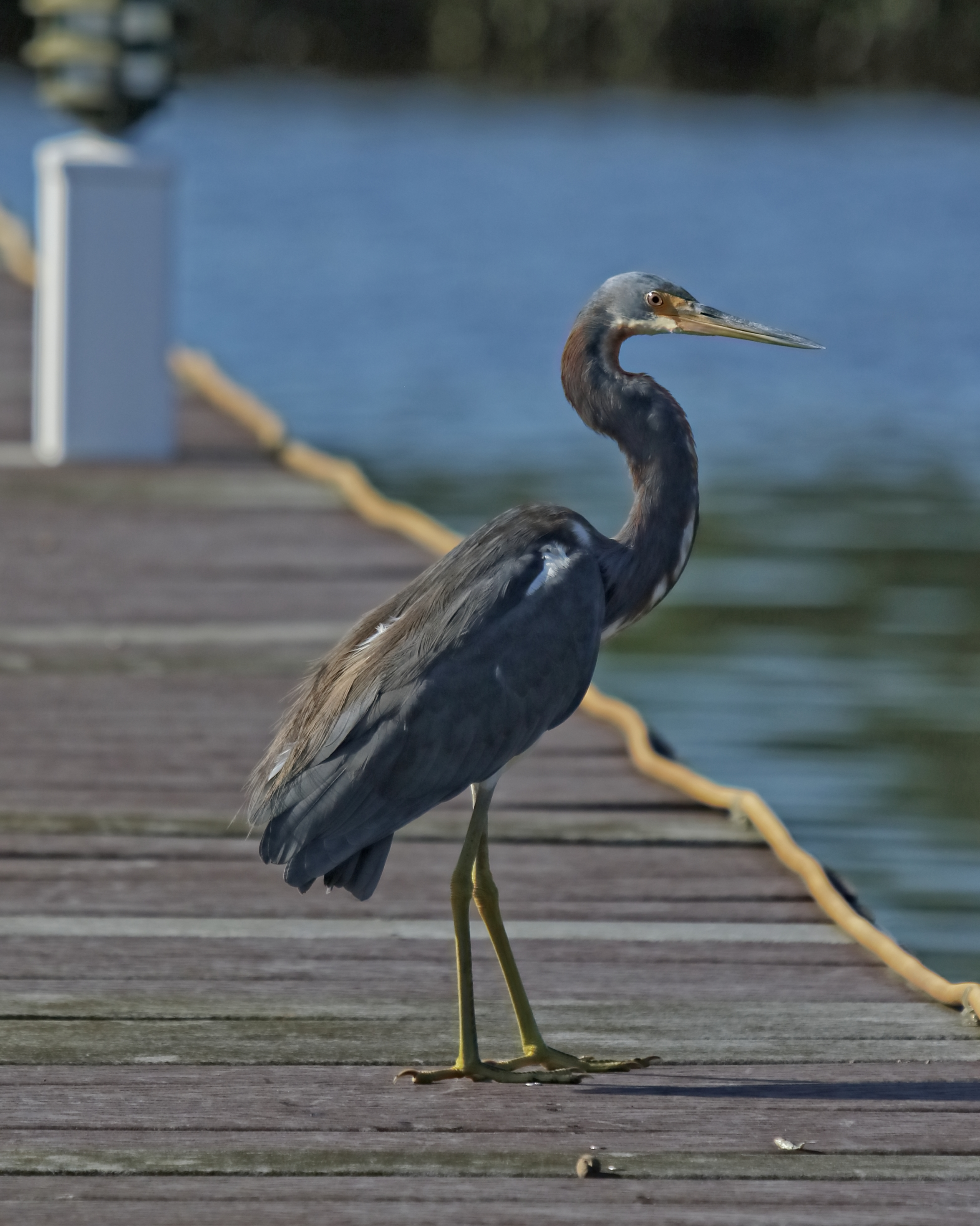 """Like my ole """"lil Buddy"""", this bird is not bothered by my presence and just relaxes a while."""