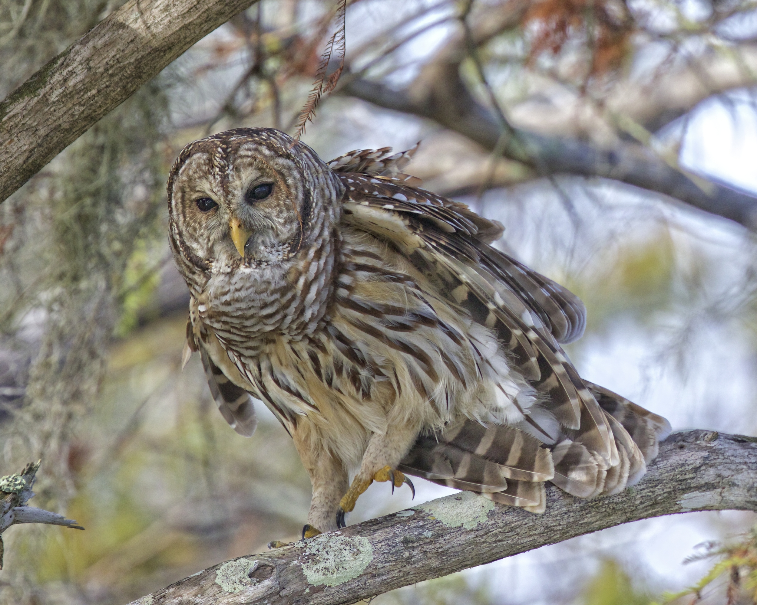I see you in that camouflaged boat, You can't fool this wise ole owl.