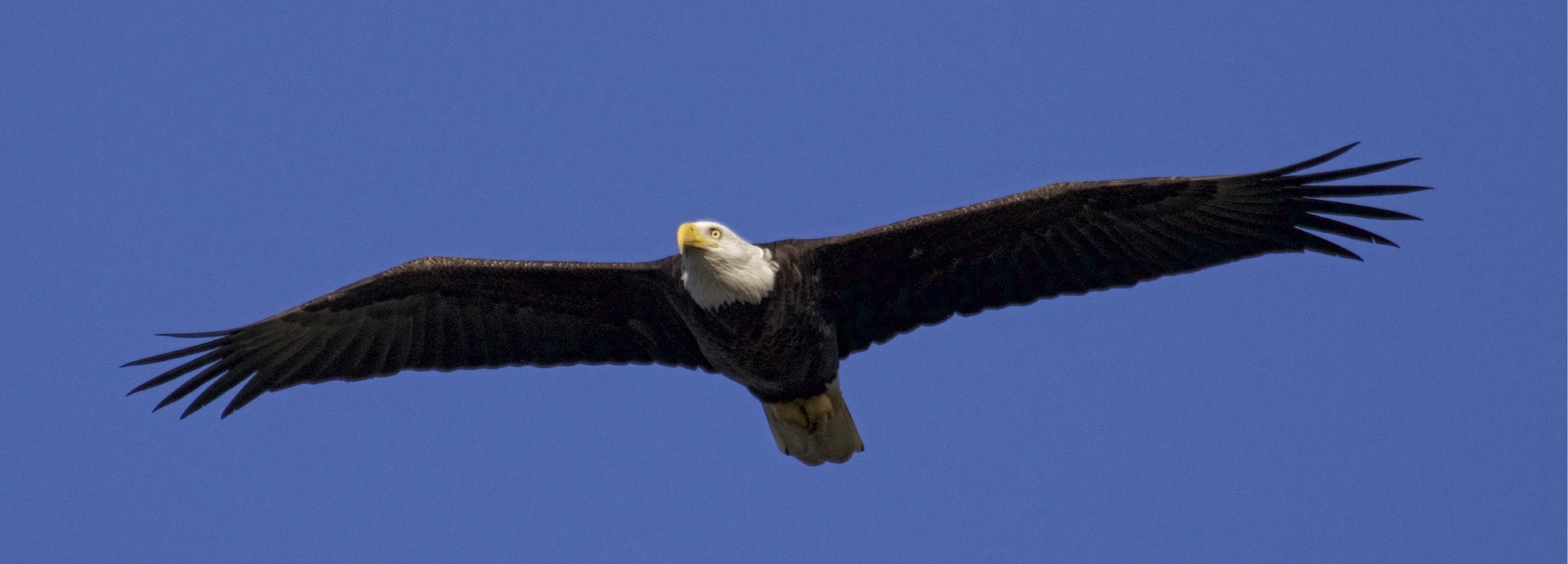 I'm good. Soaring like an Eagle..good bye blues!