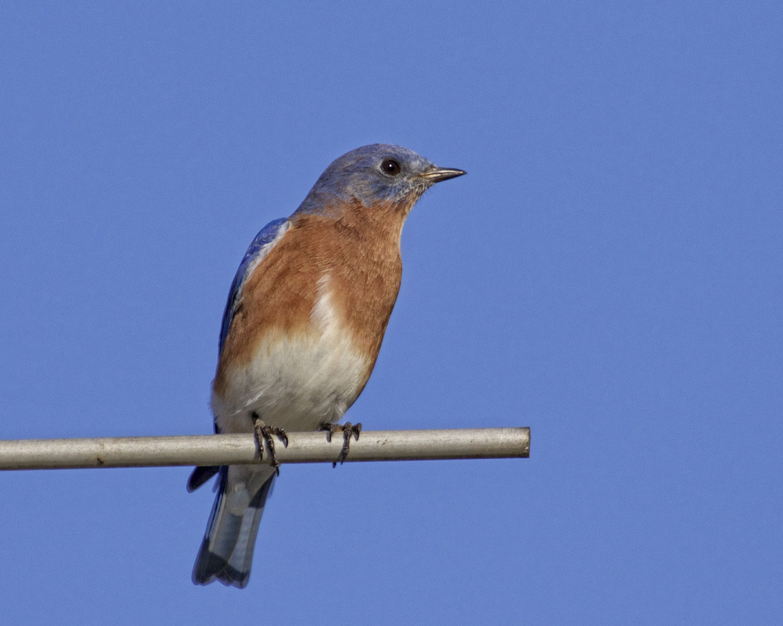 So Mr. Bluebird...don't even think about poopin on my shoulder! Be Blessed.