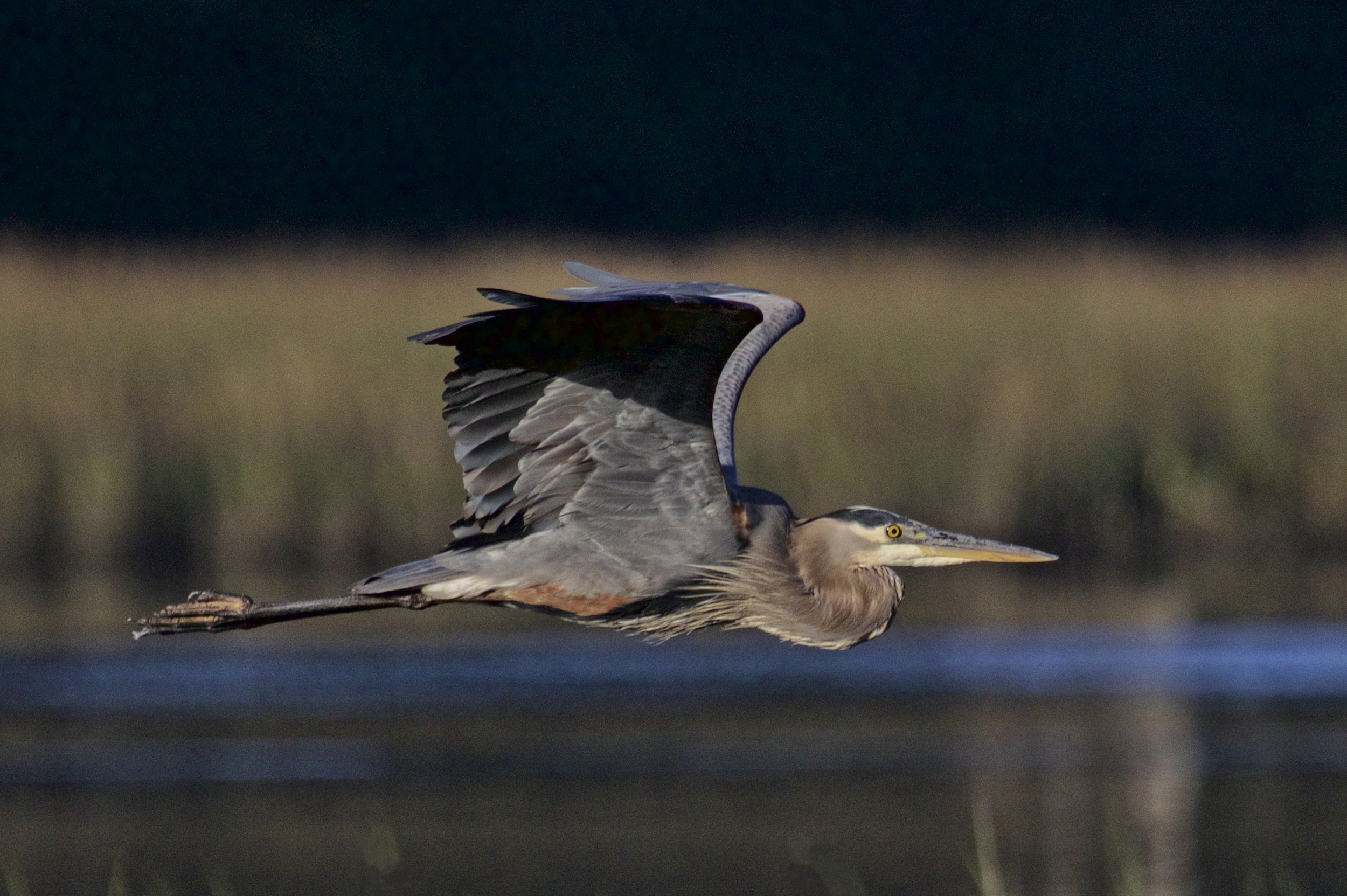 Even us Great Blue Herons get the blues sometimes...it will pass.