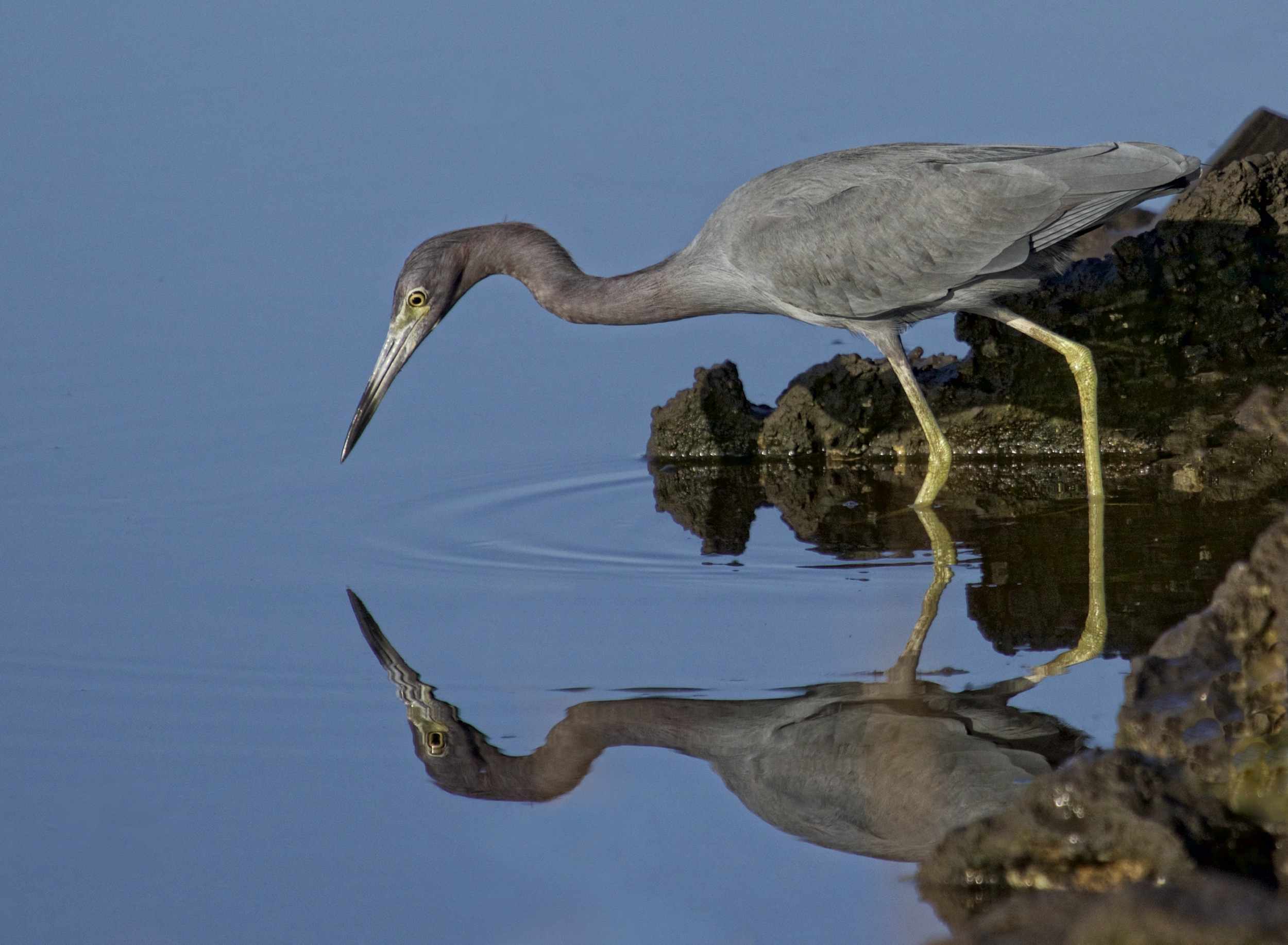 After careful recalculation Bob peers down and sees his reflection.. Six more weeks of great autumn weather coming to Florida!  Time to eat now!