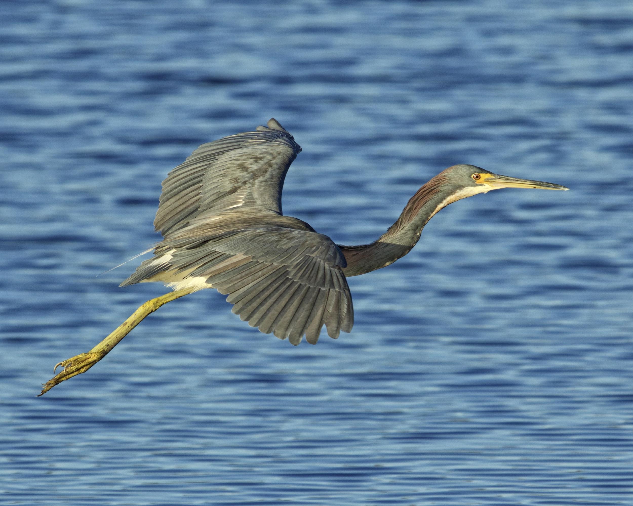 Each bird is unique in its flight..