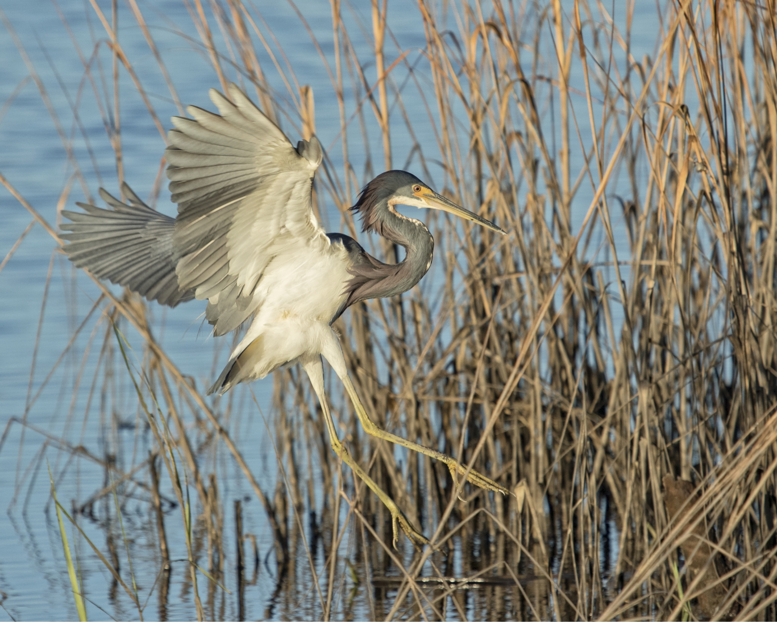 I find Solace in capturing the motion of flight and the detail of each feathered wing...