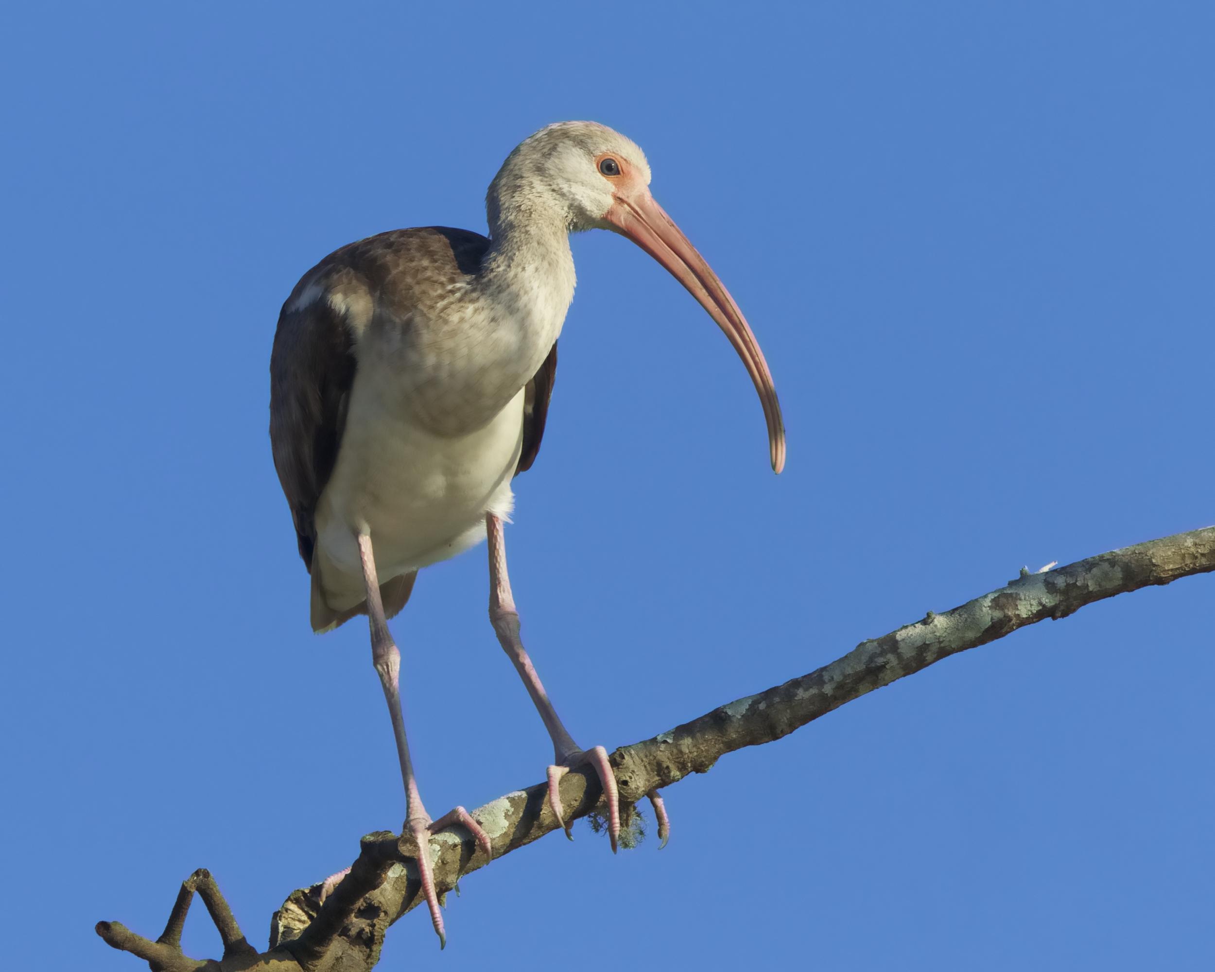 Bird on a limb !