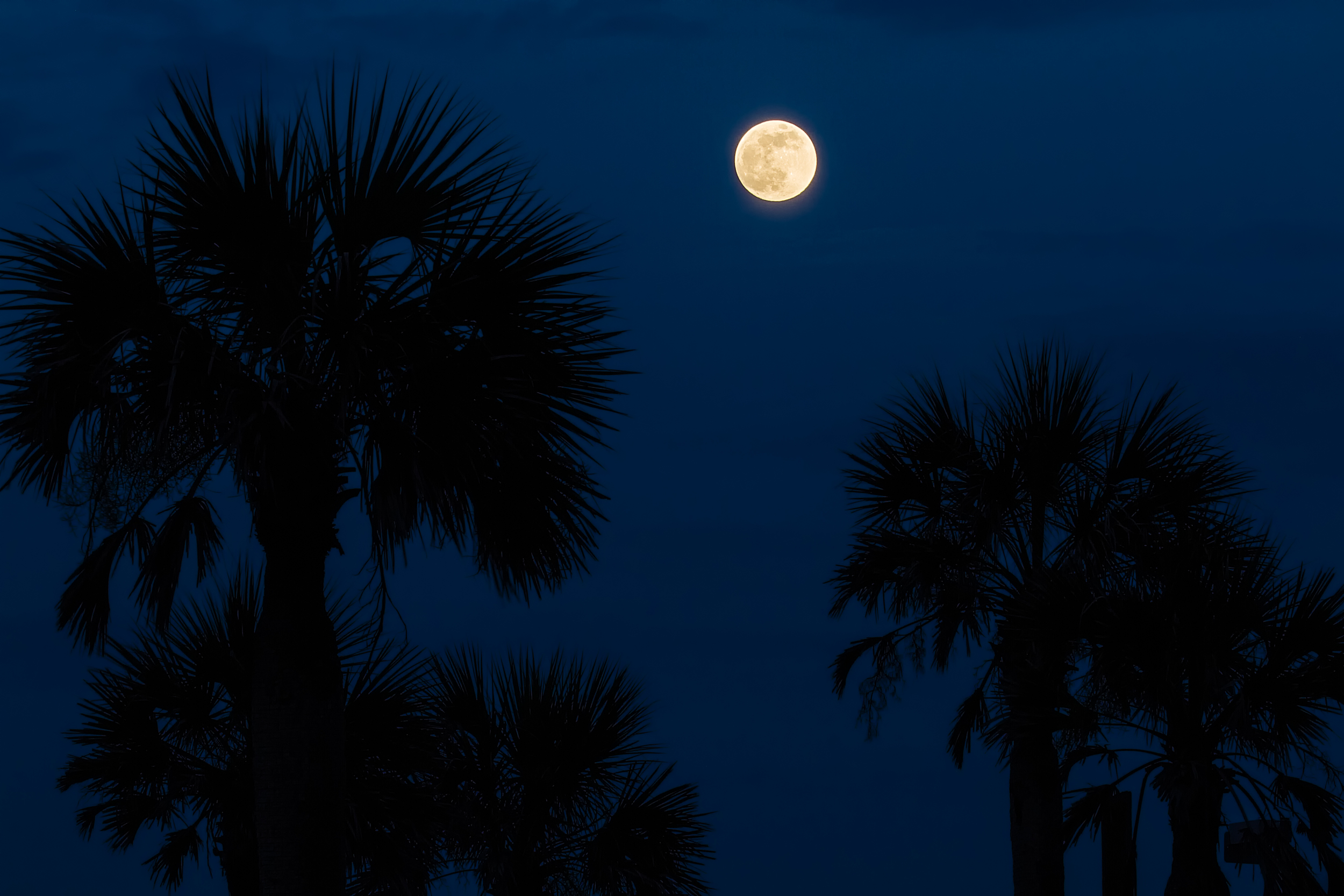 """""""Full Moon Rising"""" by my friend and professional photographer Dawna Moore with permission...one of her many specialties is teaching Blue Hour Photography"""