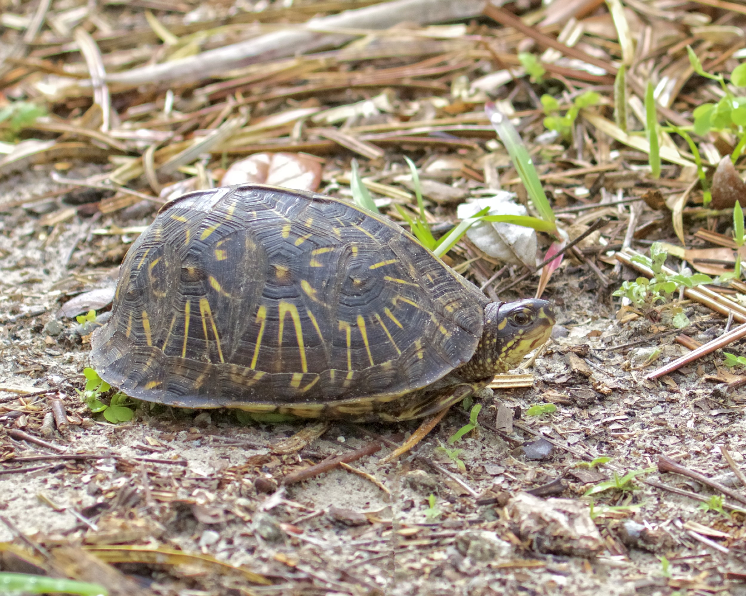 Has the tax man left yet said the box turtle?